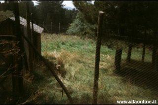 Centro Visitatori di Cupone. Recinto del lupo